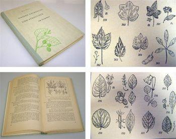 Unsere Laubbäume u. Sträucher im Sommer Bestimmungsbuch