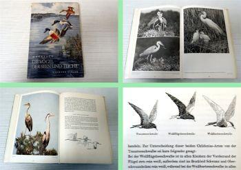 Die Vögel der Seen und Teiche Dr. W. Makatsch 1958 Neumann Verla
